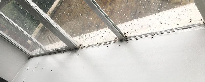 Portfolio Finished Jobs – Ants