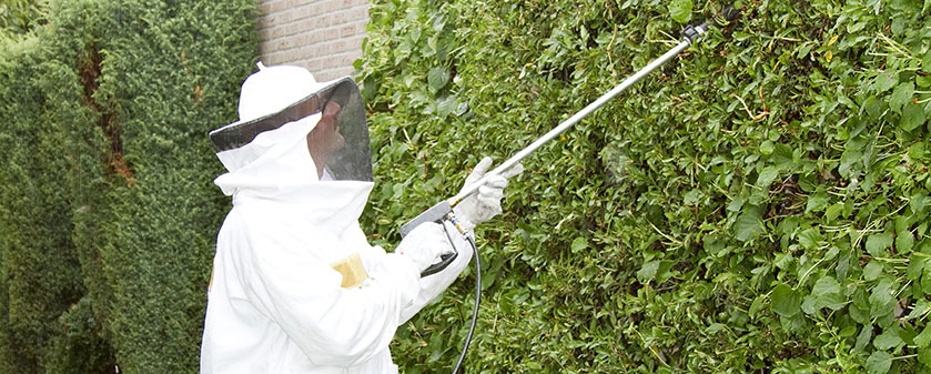 Wasps Pests Control in London