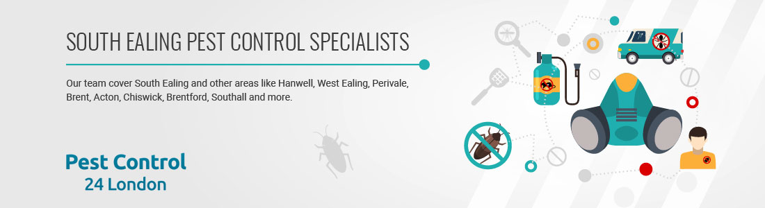 South Ealing Pest Control