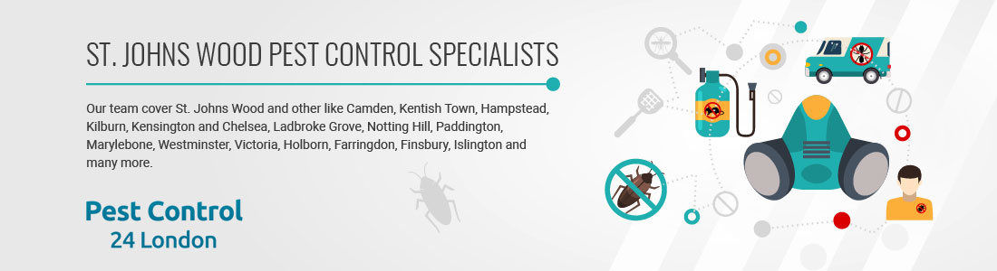 St. Johns Wood Pest Control Specialists near you!