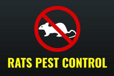 Emergency Pest Control - Rats