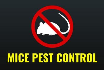 Emergency Pest Control - Mice