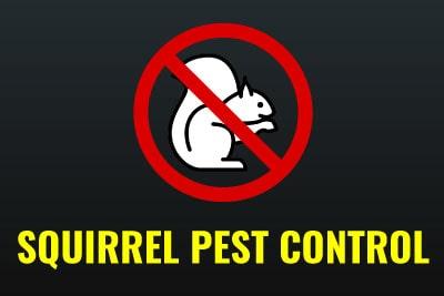 Emergency Pest Control - Squirrel