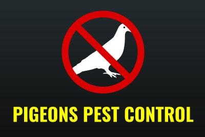 Emergency Pest Control - Pigeons