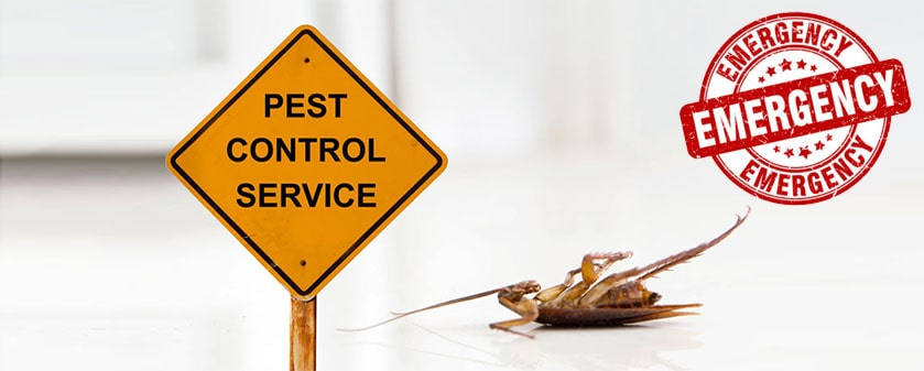 Emergency Pest Control Services in London