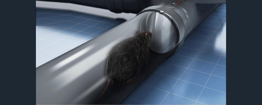 How to stop rats coming up the toilet