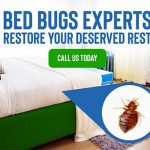 Bed bugs – diseases and infections they spread