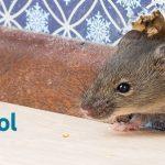 Mice in Walls and Attics