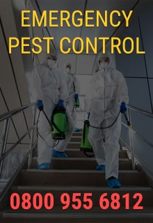 Emergency Pest Control London