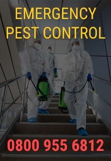 Emergency Pest Control London