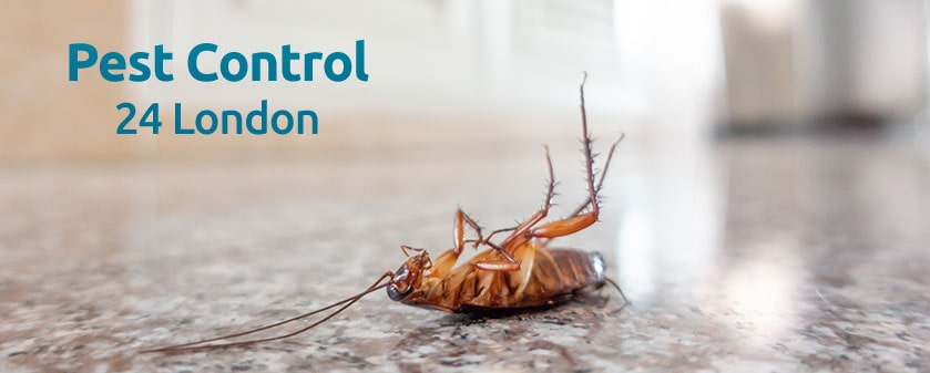 Pest Control in London 24/7
