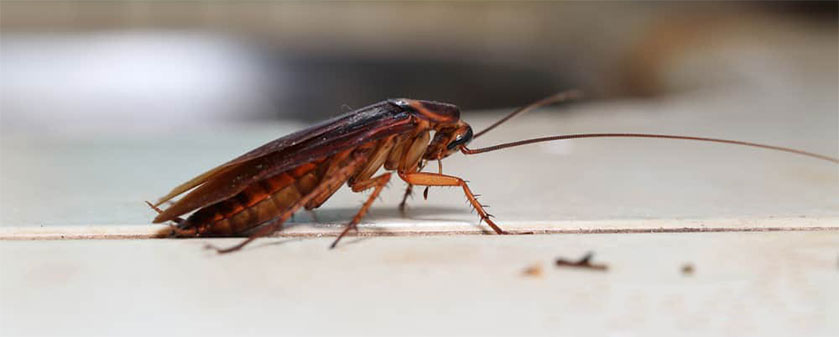 Ongoing roach control through sanitation and exclusion