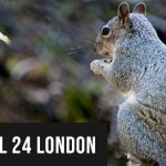 Squirrels Pest Control in London