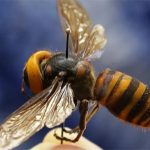 Wasp infestation in London