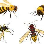 Honeybees, Bumblebees and Wasps